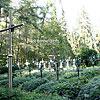 Цвинтар Лаври